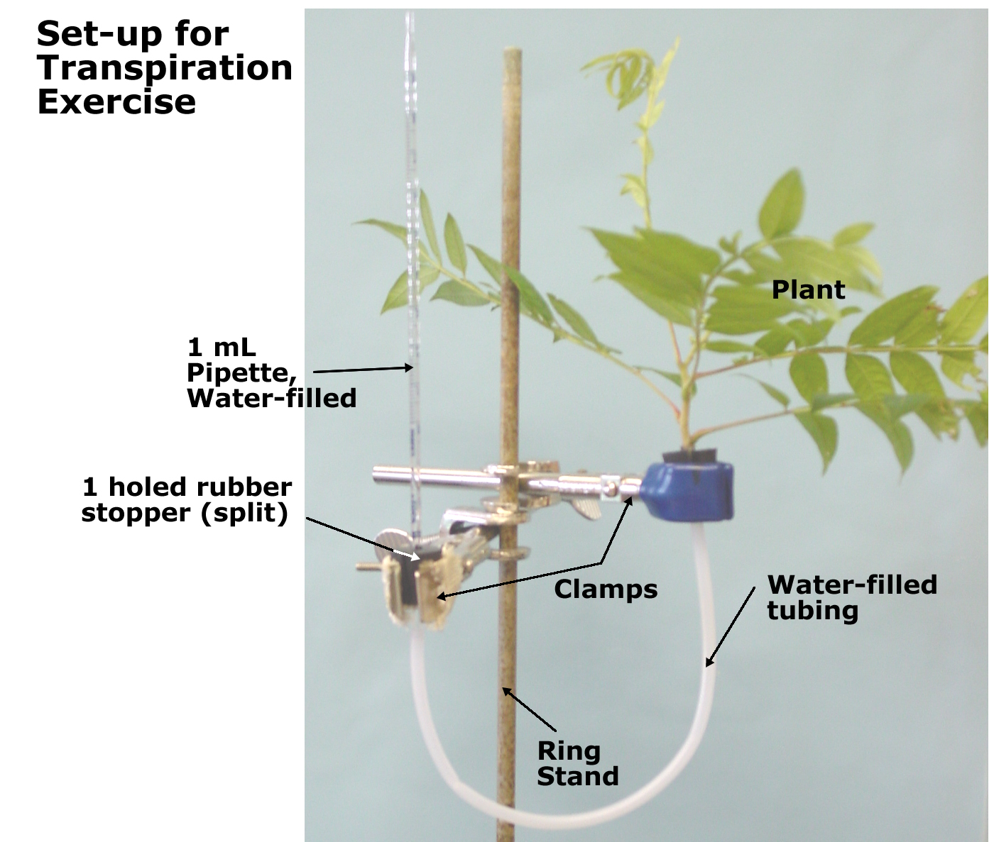 potometer plan Transpiration and the potometer, and the prescribed practical activities that   measuring water uptake using a potometer  you should be able to plan.
